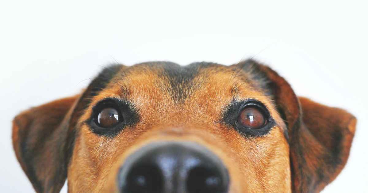 Fido Snp Lintelligenza Artificiale Che Aiuta Il Cane Il Bo Live