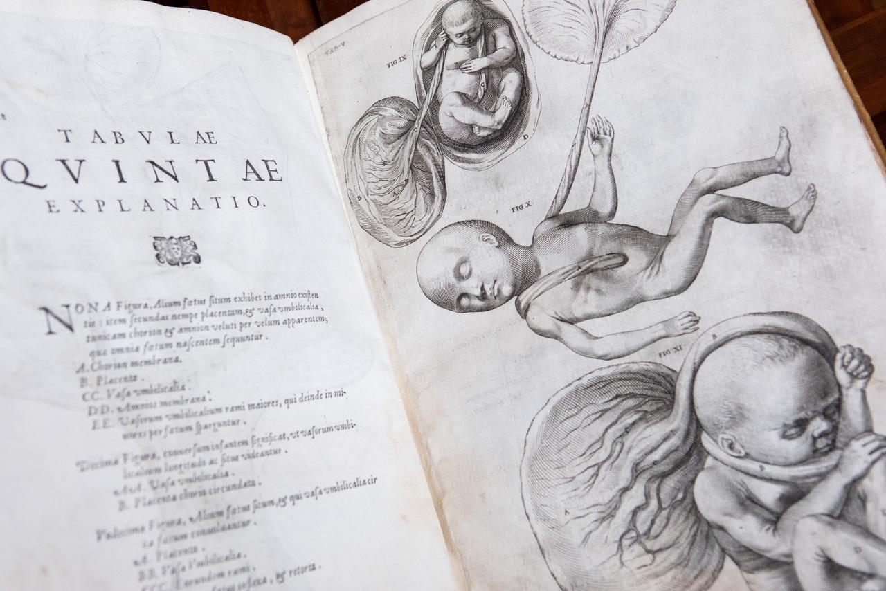 Medicina a Padova nei secoli: Fabrici d'Acquapendente, quando l'anatomia incontra l'arte 360a2441