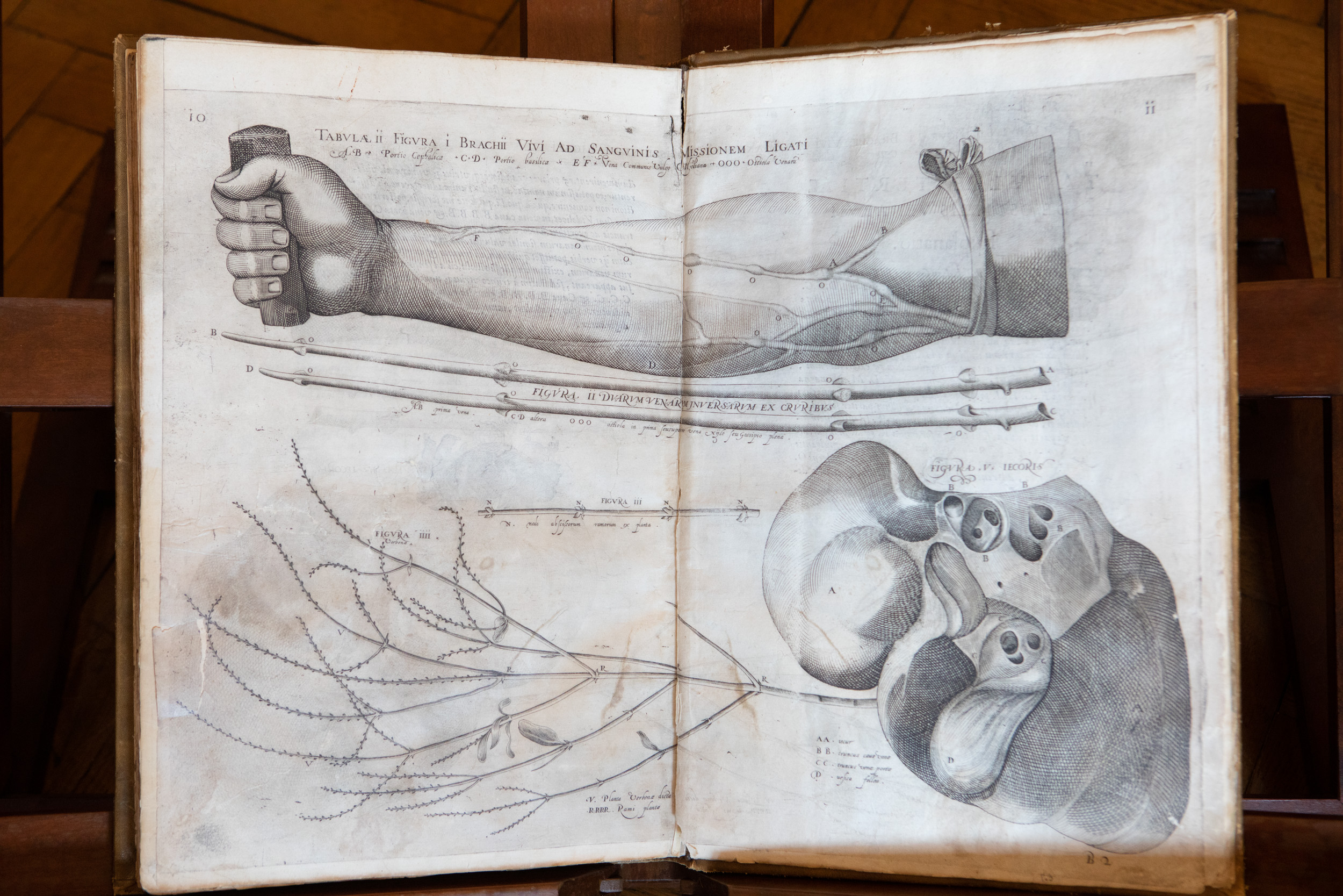 Medicina a Padova nei secoli: Fabrici d'Acquapendente, quando l'anatomia incontra l'arte 360a1870