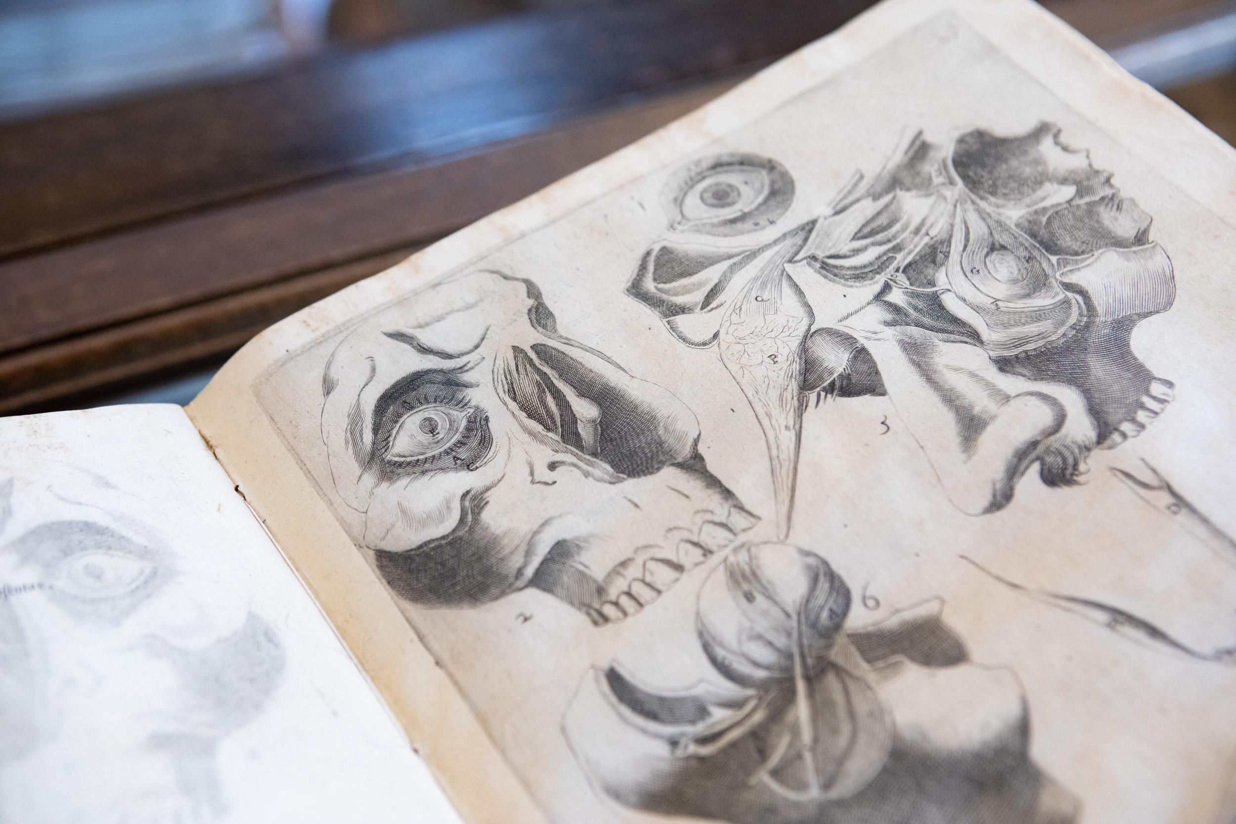 Medicina a Padova nei secoli: Fabrici d'Acquapendente, quando l'anatomia incontra l'arte 360a1915