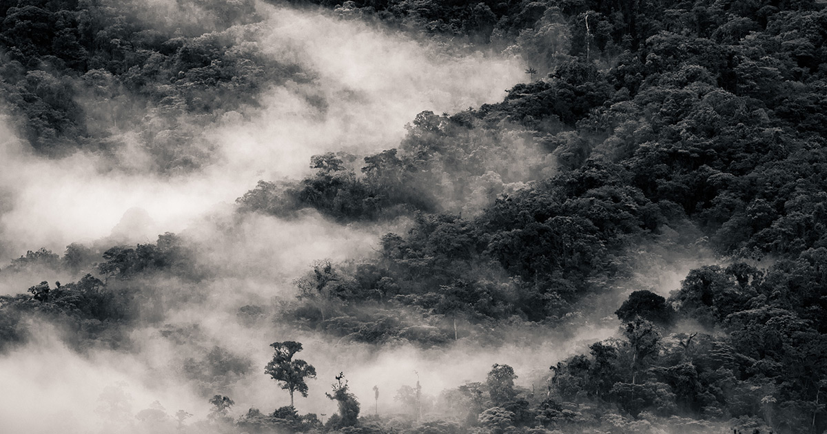 Le attività umane stanno seccando l'Amazzonia Amazzon