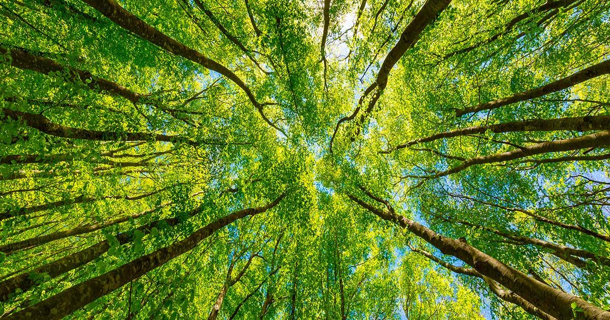 L'editoriale. La natura ci sta punendo?   Il Bo Live UniPD