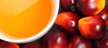 L'olio di palma nuoce alla salute (e all'ambiente)?