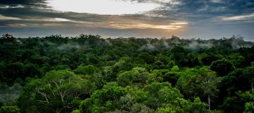 Una rete ecologica globale per salvare il futuro della vita
