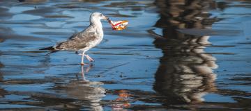 Il pericolo dell'inquinamento da plastica: fermarlo è possibile?