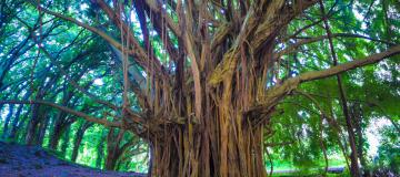 David Quammen: l'albero intricato e la resistenza antibiotica