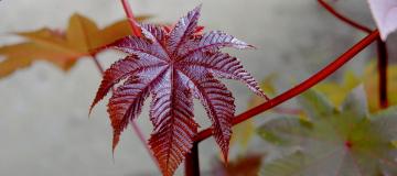La natura e noi: le piante medicinali e l'origine dell'Orto botanico