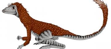 Un minuscolo antenato per i dinosauri: Kongonaphon kely