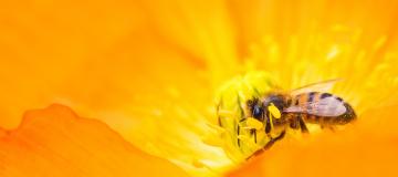 Il progetto Life PollinAction: dalla parte delle api e dei prati fioriti