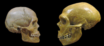 Le ibridazioni tra Homo sapiens e Neanderthal erano frequenti anche in Europa