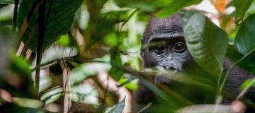 Clima e impatto antropico, una mappa del rischio per le foreste pluviali dell'Africa centrale