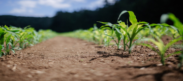 Agricoltura intensiva e perdita di biodiversità: un'altra strada è possibile