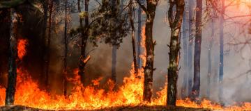 Incendi zombie nelle foreste boreali: cosa sono e che impatto hanno sul rilascio di carbonio in atmosfera