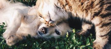 Come cane e gatto, anche nella ricerca
