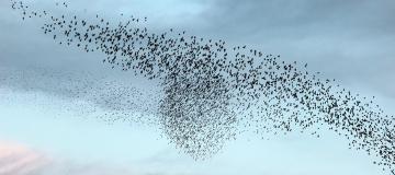 Le migrazioni degli uccelli e la minaccia del cambiamento climatico