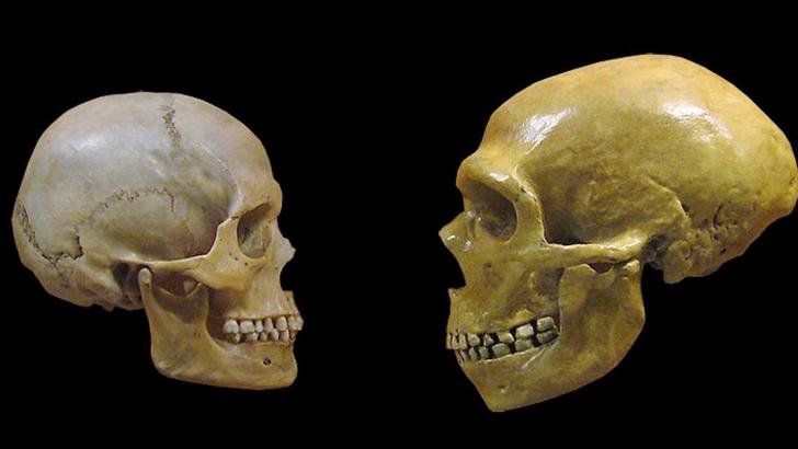 sapiens e neanderthal